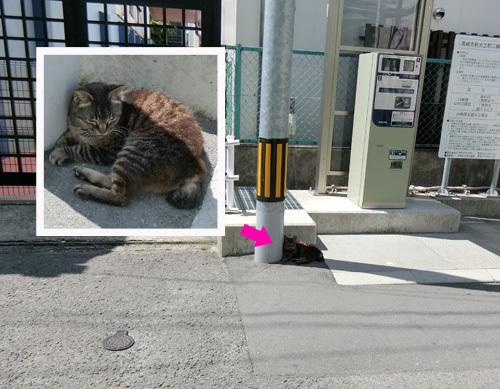 ネコ発見。 アツイにゃぁ。