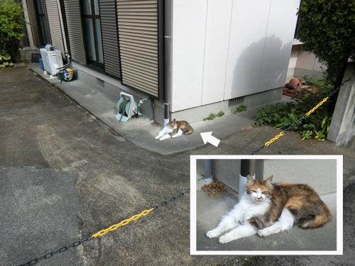 ネコ発見! 2匹目。