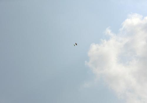 カブⅢ飛んでるトコ、その2!