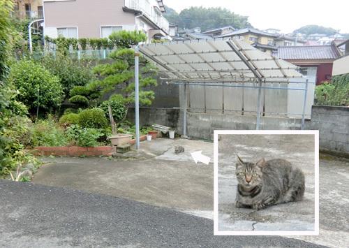 本日の~、ネコ発見っ! その1!