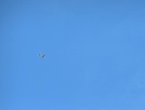 高高度を行くカイチョーの機体、ちょ~拡大!