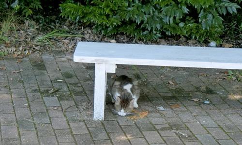 ネコ発見!その2。