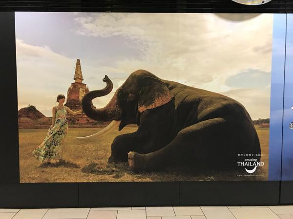乃木坂46 amasing THAILAND2