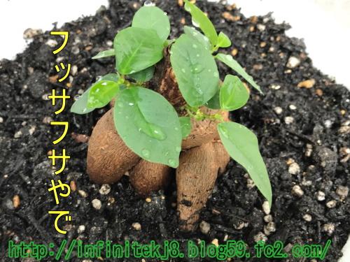 daichan07291.jpg