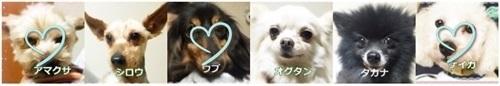 熊本シリーズ0724