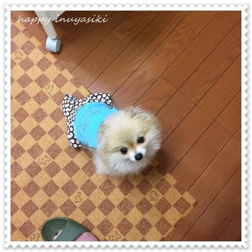 mini16IMG_1886-20170409.jpg