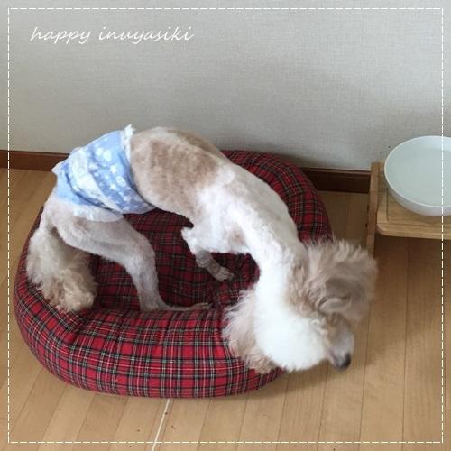 mini16IMG_5676-20170622.jpg