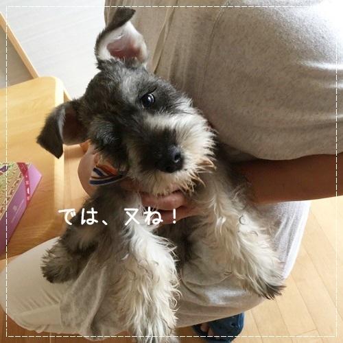 mini16IMG_6141-20170628.jpg