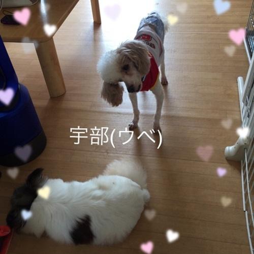 mini16IMG_6153-20170628.jpg