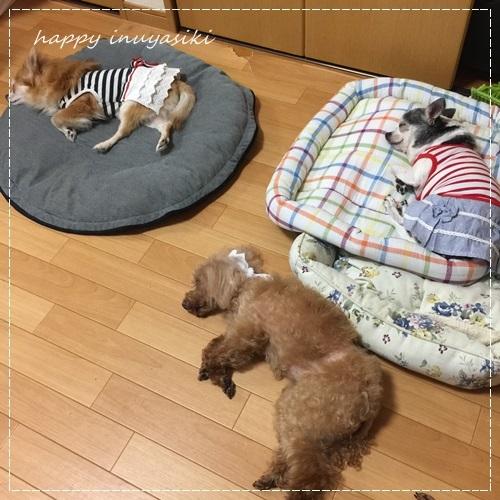 mini16IMG_6207-20170701.jpg