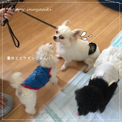 mini16IMG_6254-20170703.jpg