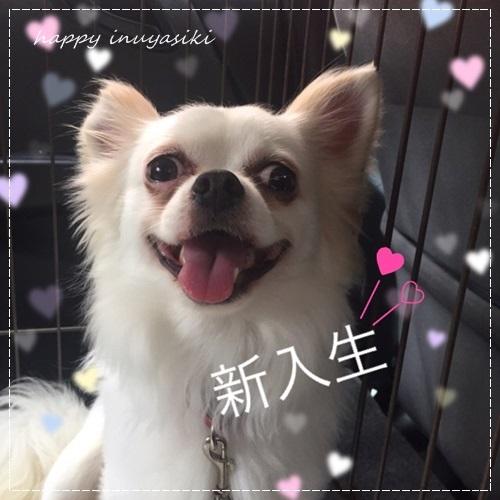 mini16IMG_6283-20170703.jpg