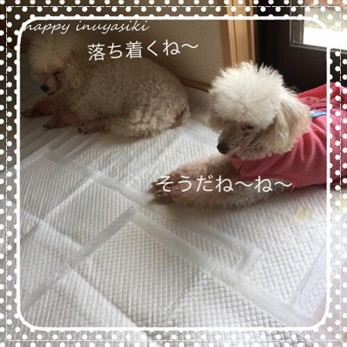 mini16IMG_6435-20170707.jpg