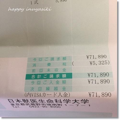 mini16IMG_7493-20170723.jpg