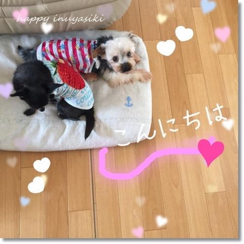 miniIMG_0612-20170830.jpg