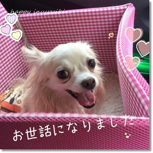 miniIMG_1502-20170910.jpg