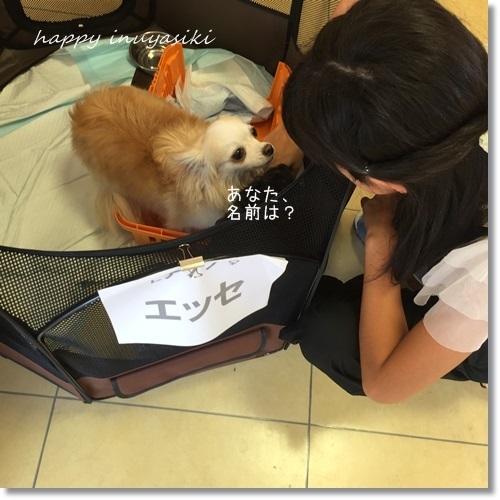 miniIMG_9808-20170822.jpg
