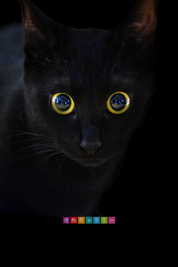 170525_cat.jpg