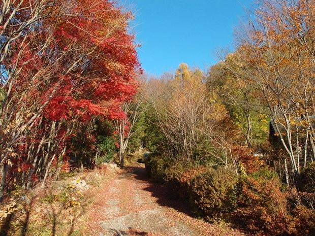 紅葉するイロハモミジのアプローチ