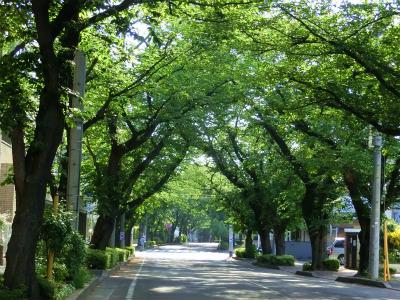 桜が終わった東京の小道
