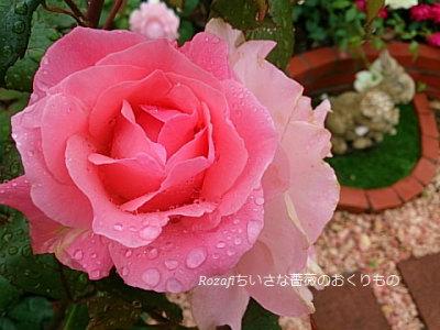 2017年6月雨の薔薇6