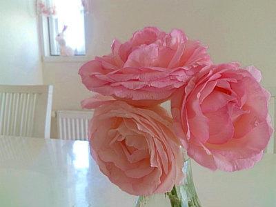 お部屋の薔薇