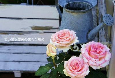 ルイの涙と白いベンチ-crop