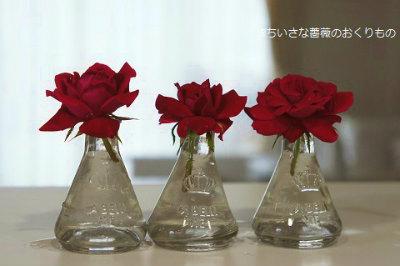 2017 7月薔薇遊び