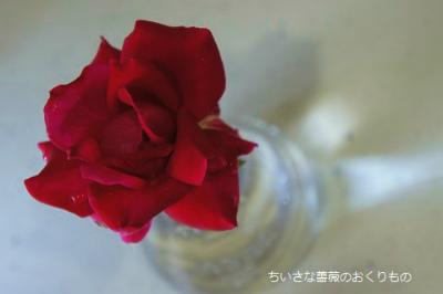 2017 7月薔薇遊び3 (1)