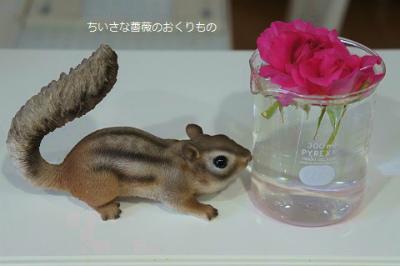 2017 7月薔薇遊び3 (2)