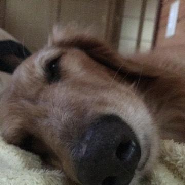 マックスと添い寝と小雨の作業2
