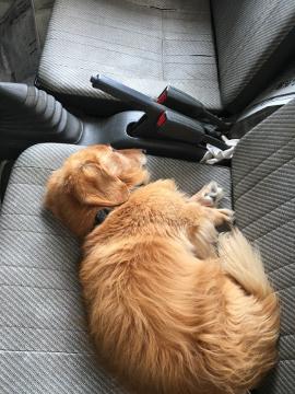 マックスと添い寝と小雨の作業6