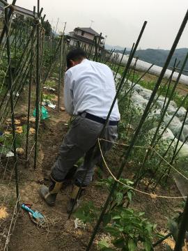 ホワイト玉ねぎとニンニク収穫