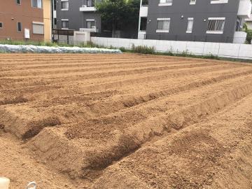大雨の前に畑の準備