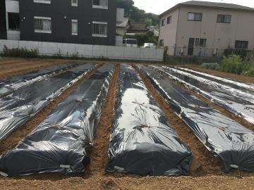 大雨の前に畑の準備2