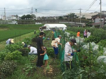 大雨の後の農園や畑