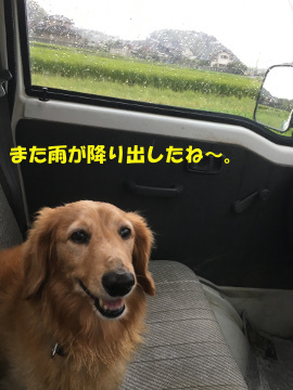 落花生再び草取り14