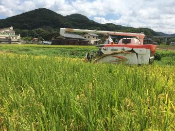 新トラクターで稲刈り4