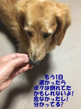 大曲花火17