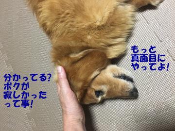 大曲花火18