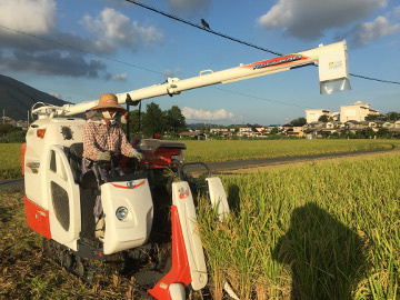 レンゲ米を稲刈り8