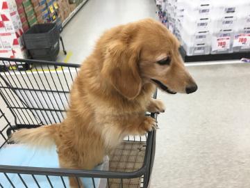 犬恋しい?2