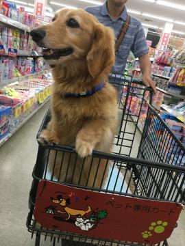 犬恋しい?3