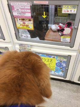 犬恋しい?4