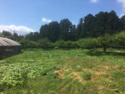 郭内部のりんご畑