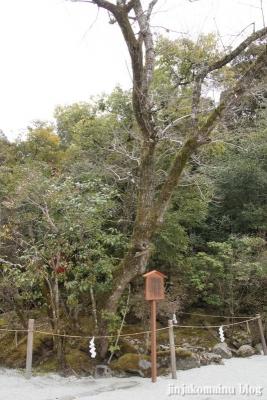 上賀茂神社(京都市北区上賀茂本山)21