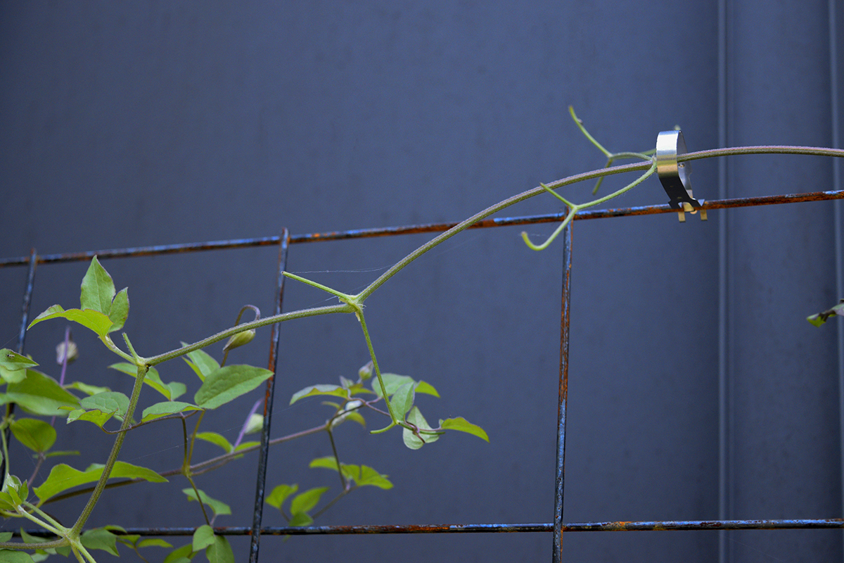 枝だけになったバネッサ