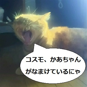 DSC_1234.jpg