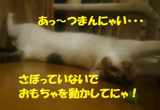 DSC_1457_20170627213050467.jpg