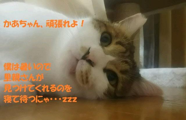 DSC_1704.jpg